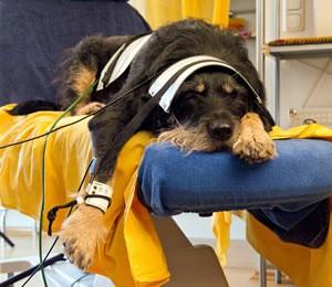 hund_katz_bioresonanz_harmonisierung