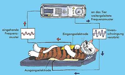 hund_katz_bioresonanz_harmonisierung_1